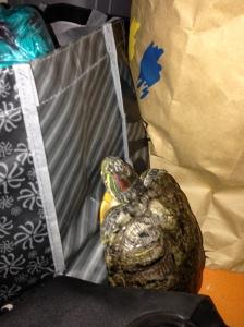 Quantum Turtle